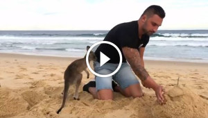 This Guy's Best Friend Is A Baby Kangaroo And Everything Is Good In The World