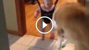 This Dog Showed Its Tiny Human Exactly What To Do When Confronted By A Shadow
